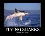 flying-sharks